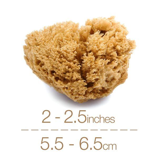 IntimateCare Sea Sponges - Mediterranean Fine Silk Sponges
