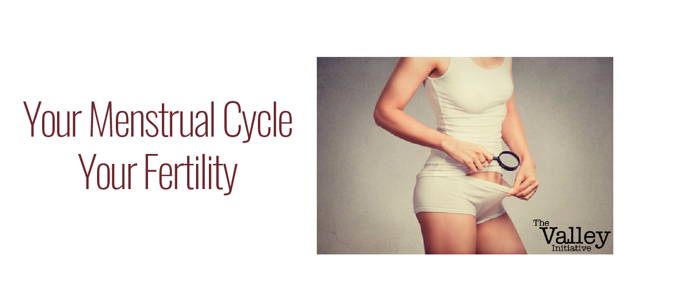 Your Menstrual Cycle. The Full Story.